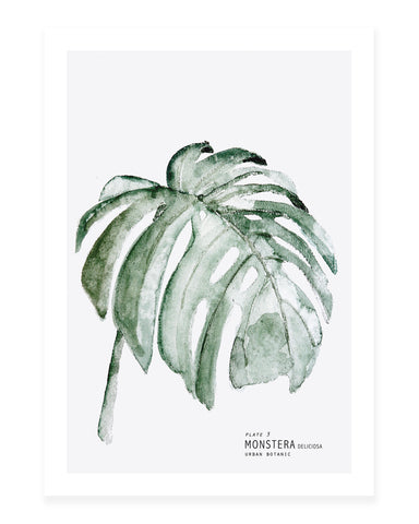 A5 Mini art print - Monstera