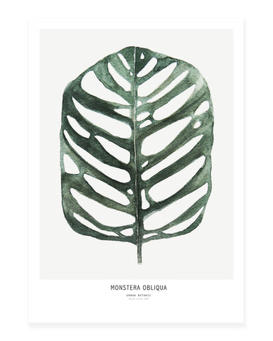 A5 Mini art print - Monstera Obliqua