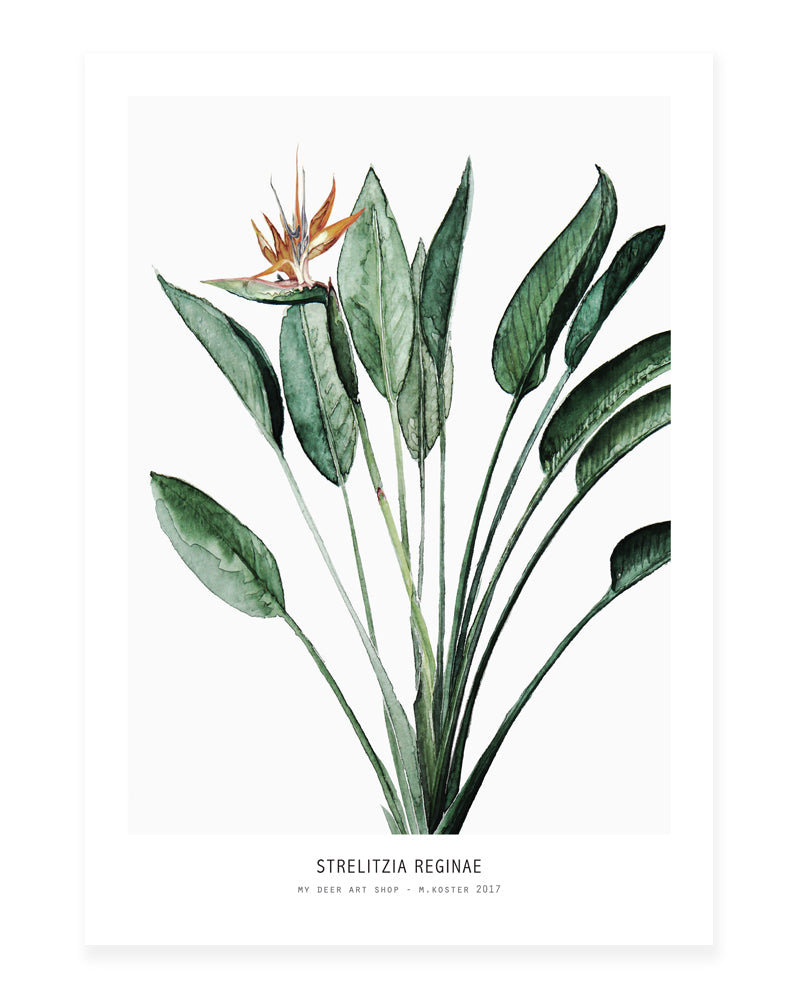 A5 Mini art print - Strelitzia