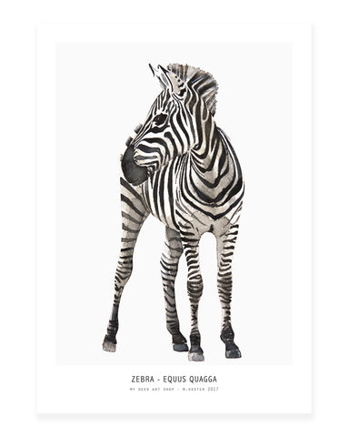 A5 Mini art print - Zebra