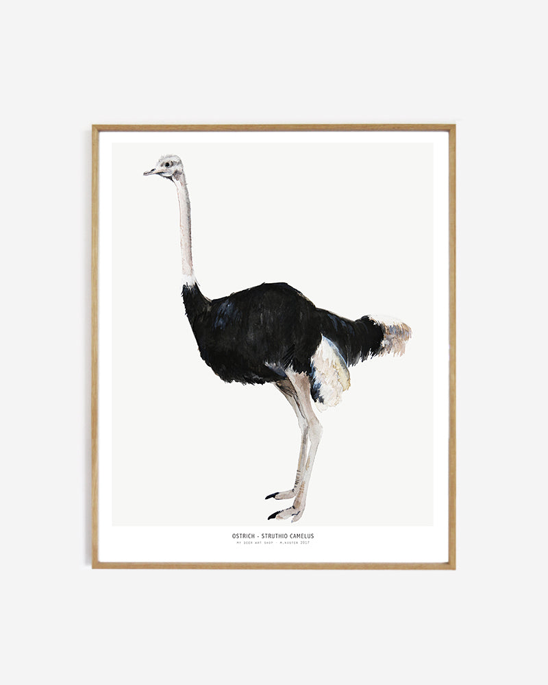 Into the wild  /  Ostrich