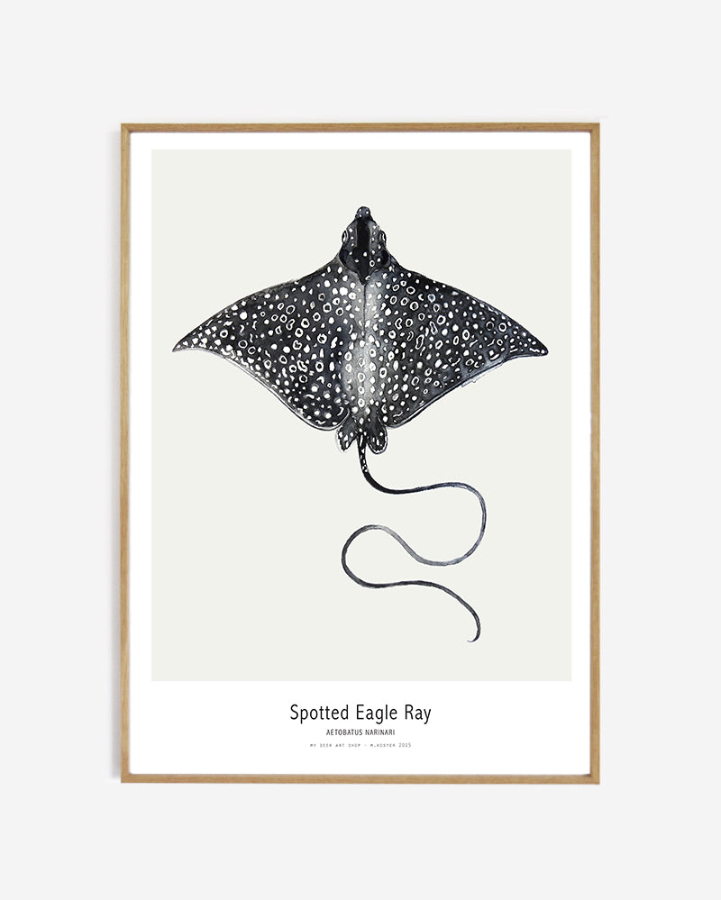 Ocean // Spotted Eagle Ray
