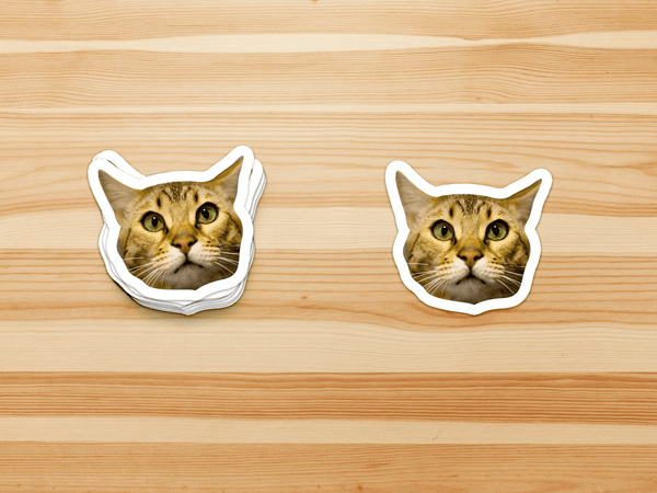 Pet Face Stickers