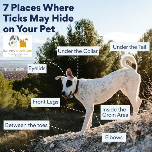 7 places where ticks may hide on your pet