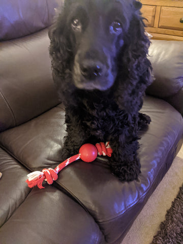 poppy with kong toy