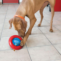 KONG Gyro Dog Toy - doggietheapp.com