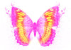Butterfly Temporary Tattoo - Watercolor Tattoos