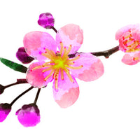 Cherry Blossom Temporary Tattoo - Watercolor Tattoos