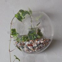 Glass Terrarium - Hanging Wall Bowl - Small - MysticSoul_108
