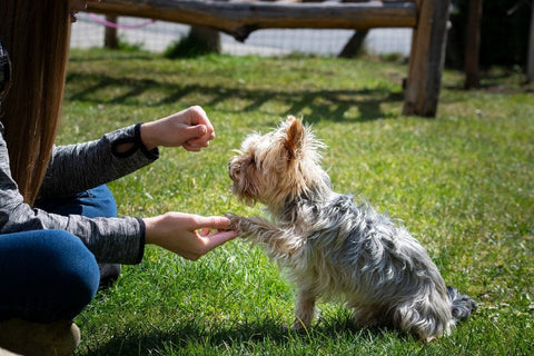 Dog Being Trained by Human