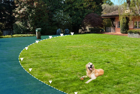 Dog in Yard with E-Fence Boundary