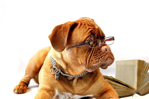 Dog with Glasses Lying Beside Open Book