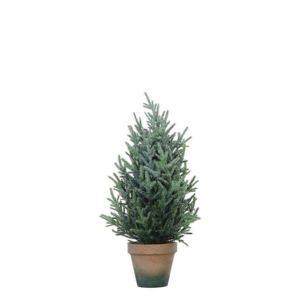 Pine Tree in Colored Pot