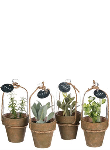 HERB IN CLOCHE POTTED PLANT 4