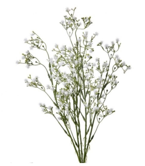 White Popinac Bush