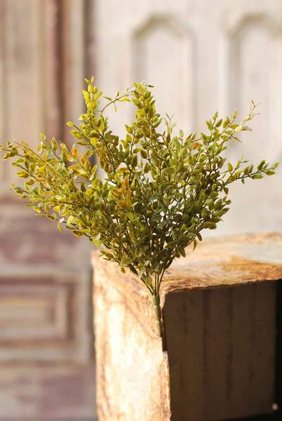 Lemon Bush Sprig