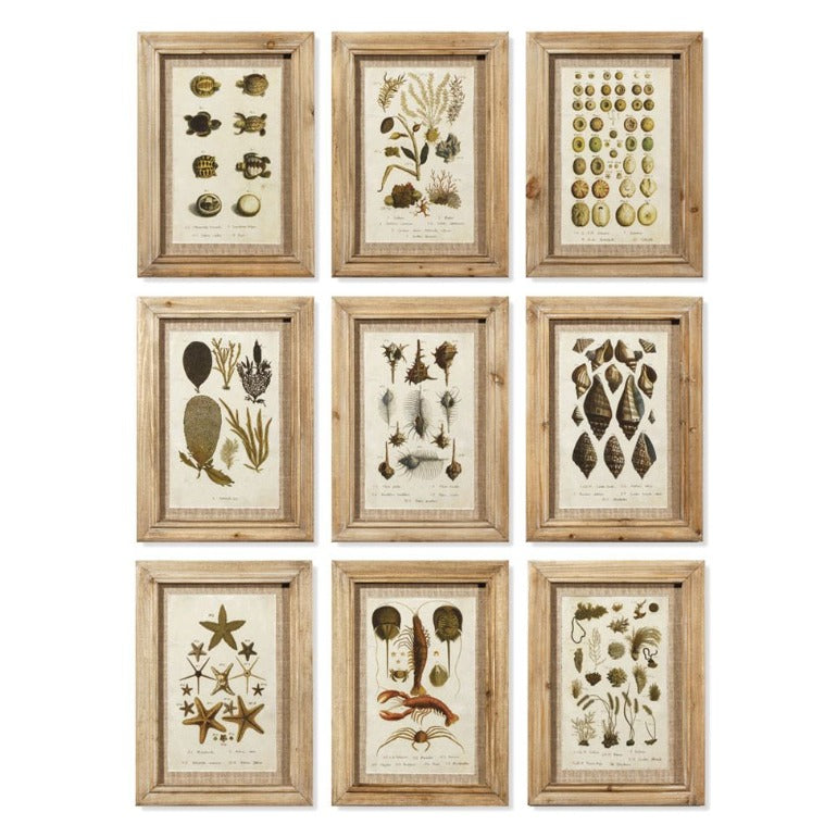 framed antibes prints set | framed shells and sea life art prints | beach decor | rustic decor | shop a dash of casual home decor and art online or in store | Located inside the Corner Cartel in Boerne | best boerne shops for home decor vintage items accessories and gifts
