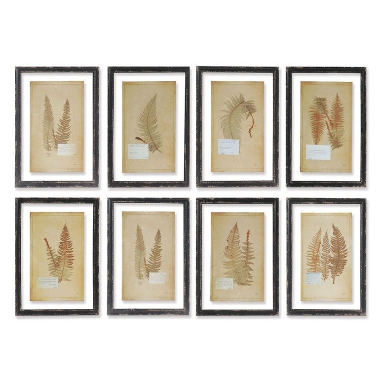 framed vintage fern prints | botanical prints | farmhouse decor | traditional style home decor | wall art | shop a dash of casual home decor and art online or in store | Located inside the Corner Cartel in Boerne | best boerne shops for home decor vintage items accessories and gifts