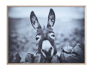 Black & White Donkey on Canvas Framed Wall Décor