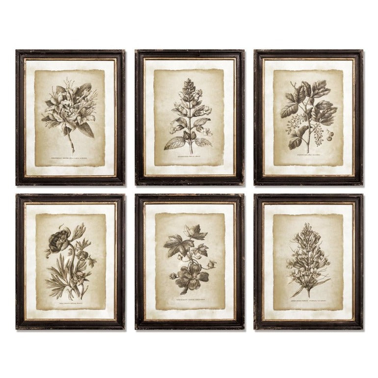 framed vintage floral prints | botanical prints | wall art | farmhouse decor | traditional wall art | shop a dash of casual home decor and art online or in store | Located inside the Corner Cartel in Boerne | best boerne shops for home decor vintage items accessories and gifts