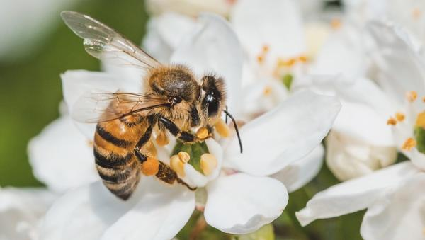 A pollinator's garden, tips for saving endangered bees