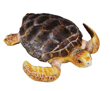 Loggerhead Turtle - Collecta