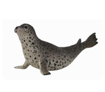 Spotted Seal - Collecta