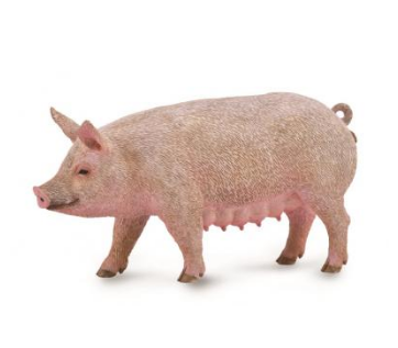 Sow (pig) - Collecta