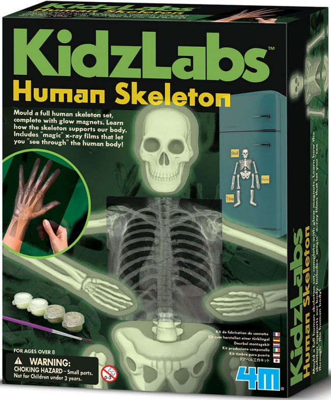 Human Skeleton (glow in the dark) - Kidzlabs