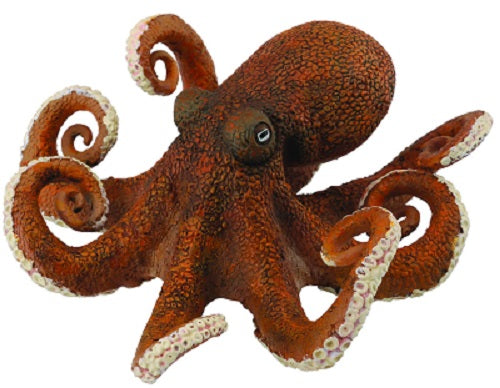 Octopus - Collecta