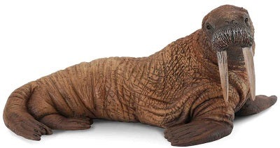Walrus Adult - Collecta