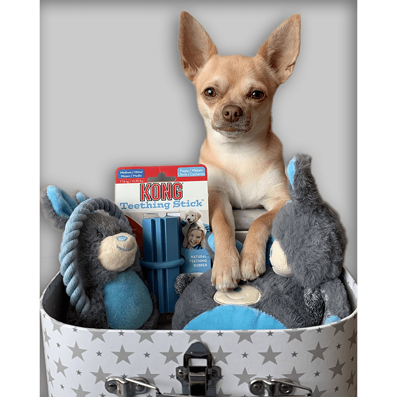 Puppy Gift Box – Welcome Present for Boys