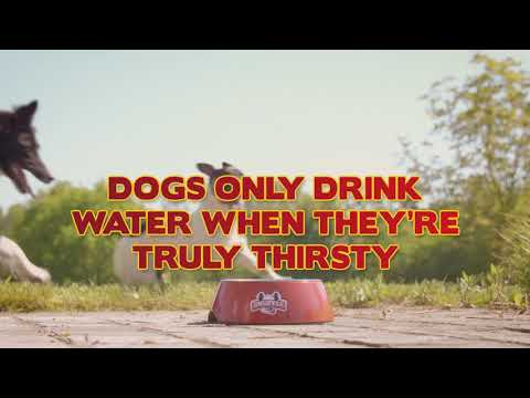 Party Beers For Dogs 4 x 25 cl