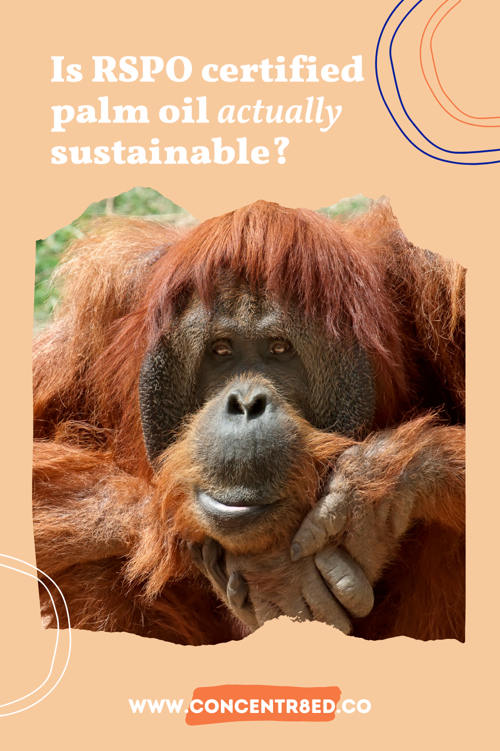 What is the RSPO and is RSPO certified palm oil actually sustainable? Palm oil free