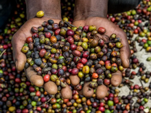 Load image into Gallery viewer, Tanzanian Peaberry