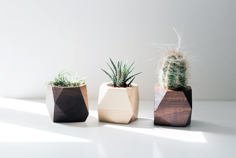 Geometric Air Plant / Succulent Planters - Set of 3 - Walnut & Maple