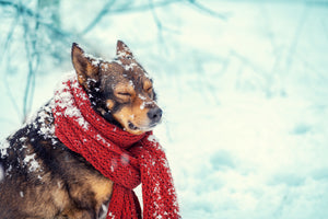 Keeping Pets Safe and Warm During Winter