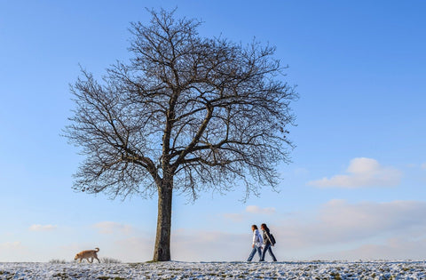 couple walking dog outside in winter with decidious tree without leaves