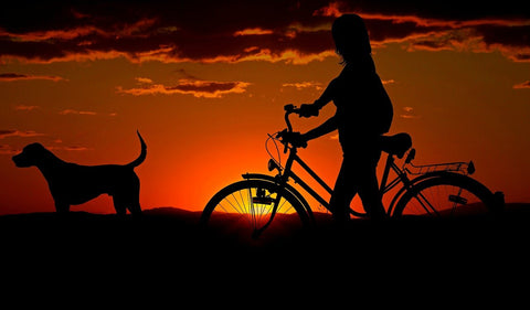 sunset in background, with side view of dog ahead of person on bike