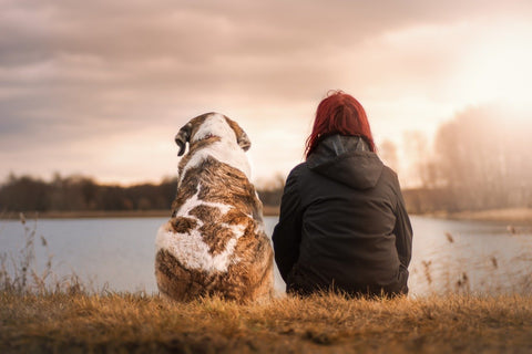 view of the backs of dog and human sitting by a lake