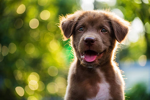 puppy with leaves in the background