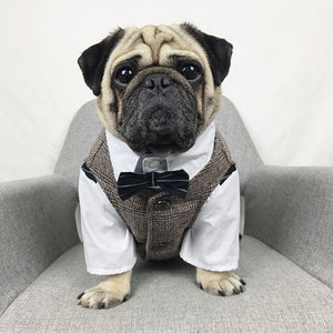 Pug wearing a vest and shirt