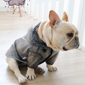 French bulldog wearing a dog rain jacket