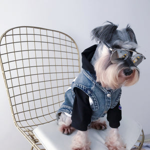 Small dog sitting on a chair, wearing a hoodie, jean jacket and sunglasses