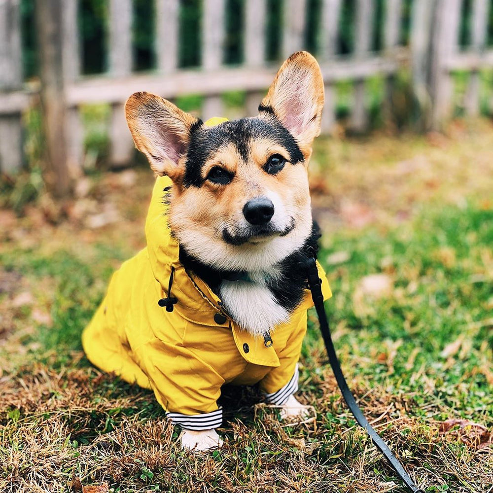 yellow dog rainjacket laid flat