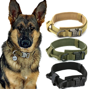 German shepherd on left and 3 different coloured collars to the right