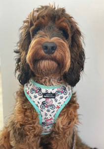 Pawsome Paws 'Maurice The Bear' adjustable harness!