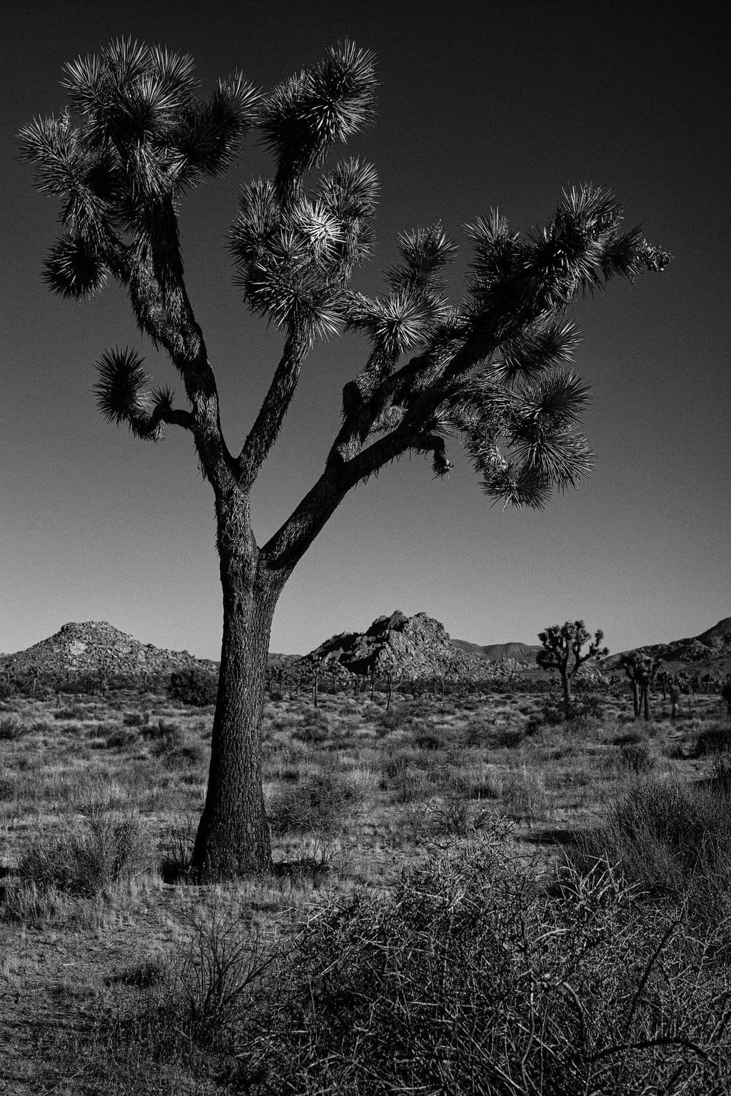 Joshua Tree National Park 1, California