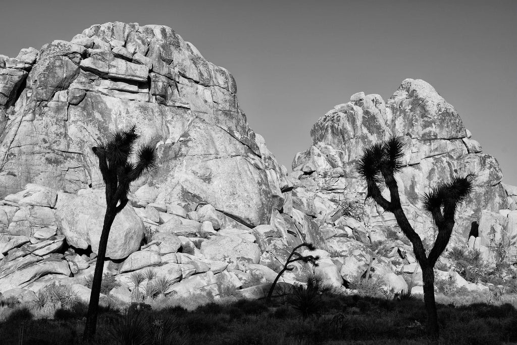 Joshua Tree 3, California