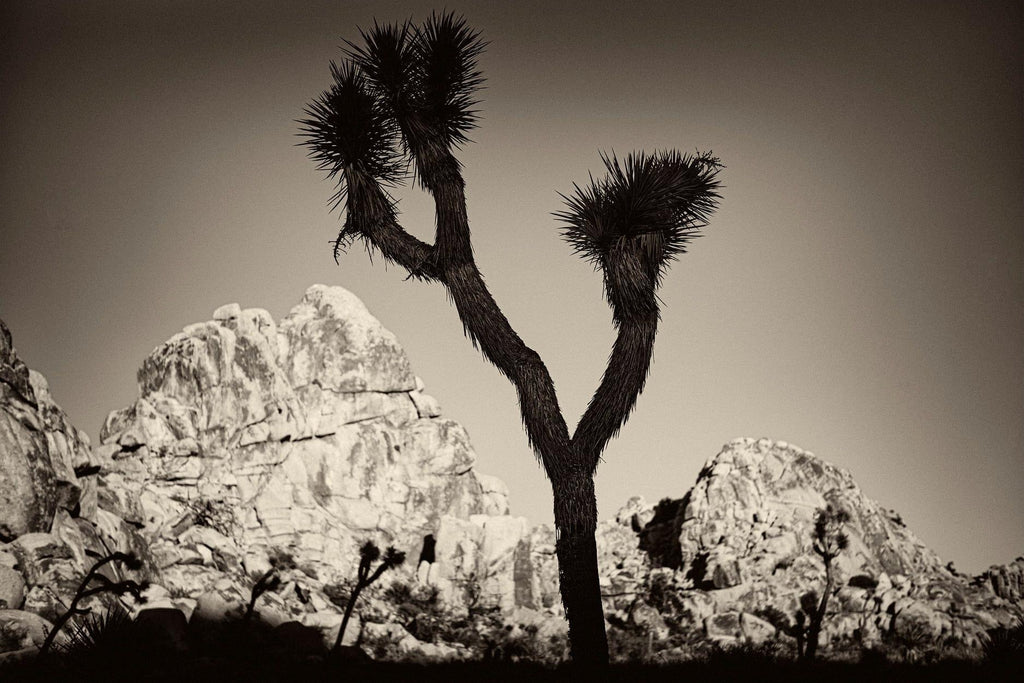 Joshua Tree 4, California